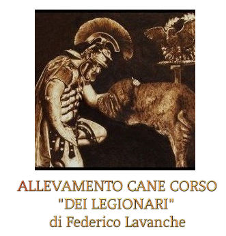 Allevamento Cane Corso - dei Legionari, Torino.